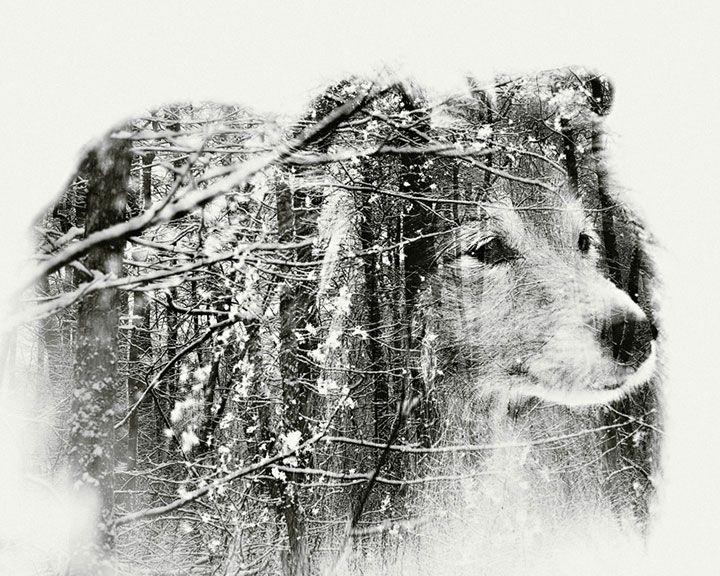 L'homme et la nature fusionnent dans cette saisissante série de photographies en surimpression