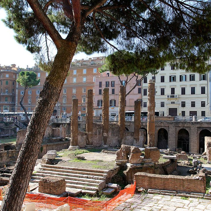 Largo di Torre Argentina is a square in the quarter Pigna, Rome, Italy, that hosts four Republican Roman temples, and the remains of Pompey's Theatre, where Caesar killed. It is located in the ancient Campus Martius. The Torre Argentina Cat Sanctuary, a shelter for homeless cats (of which Rome has many), as the historical area abounds with various breeds of cats. #italy #rome #largoditorreargentina #quare #pigna #quarter #travel #citytrip #repuclican #temples #cats #sanctuary #catshelter