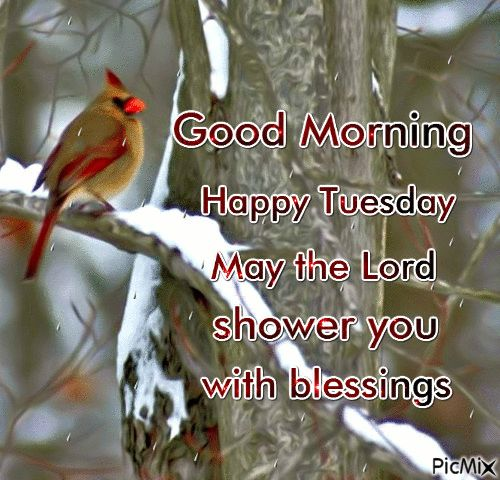 Good Morning, Happy Tuesday May The Lord Shower You With Blessings