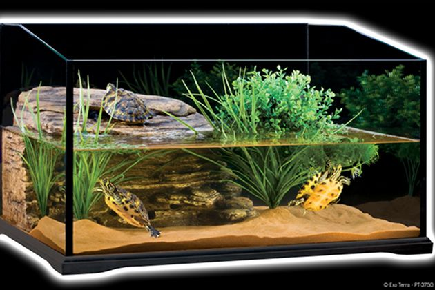 turtle tanks | turtle-tank