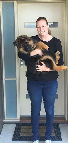 Eles crescem rápido! Casal mostra evolução de cão pastor alemão em oito meses   Virgula