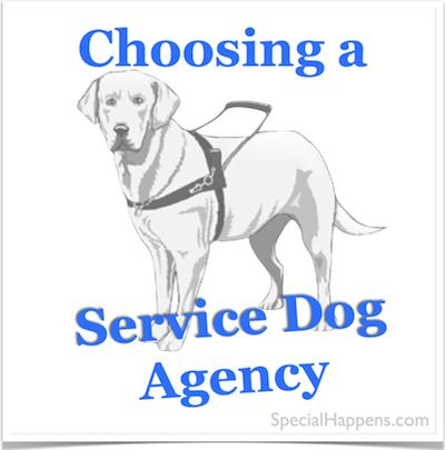 Tips on Choosing a Service Dog Agency