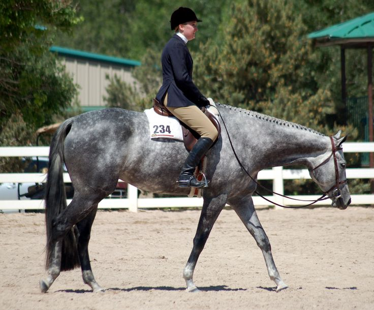 hunter under saddle horses | The ideal Hunter Under Saddle horse should move out with a long, low ...