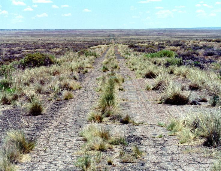 petrified forest natl pk singles over 50 Pedal the petrified 2018  petrified forest national park  50 km/31-mile one-way trip to rainbow forest with transportation back to the start at tiponi point.