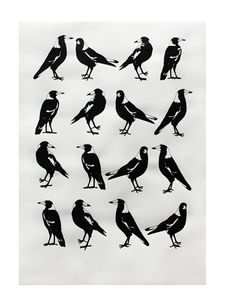 """a group of Magpies is called a Tiding of Magpies, also several other names including a """"Murder"""" as they are also corvadae (like crows)"""