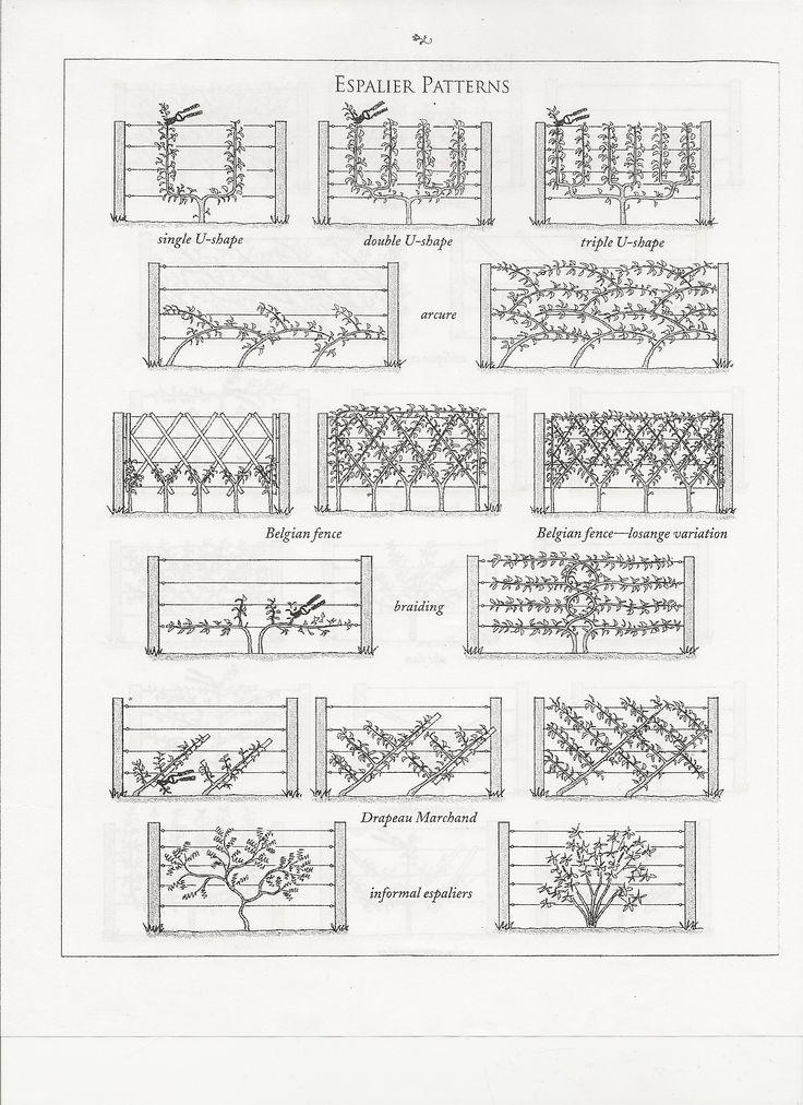 Espalier patterns