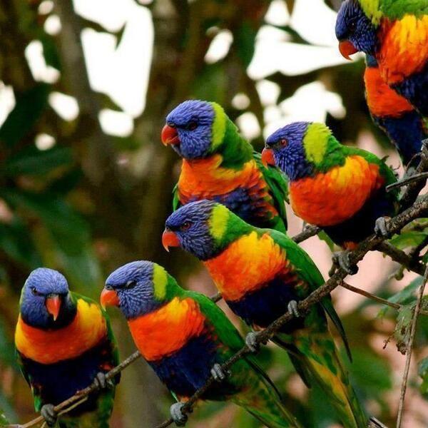 """""""Gli uccelli tropicali sembrano curiosi peluches usciti da un negozio di giocattoli. ... Questo argomento è molto serio e credo che non sia disgiunto dal divino; ad ogni modo, è vero che quando vediamo certe cose per la prima volta avvertiamo immediatamente la sensazione che siano creazioni artefatte; sentiamo la presenza delle dita di Dio"""". GKC - Cosa c'è si sbagliato nel mondo"""