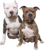 Gevaarlijke of agressieve hondenrassen: Bestaan ze wel?