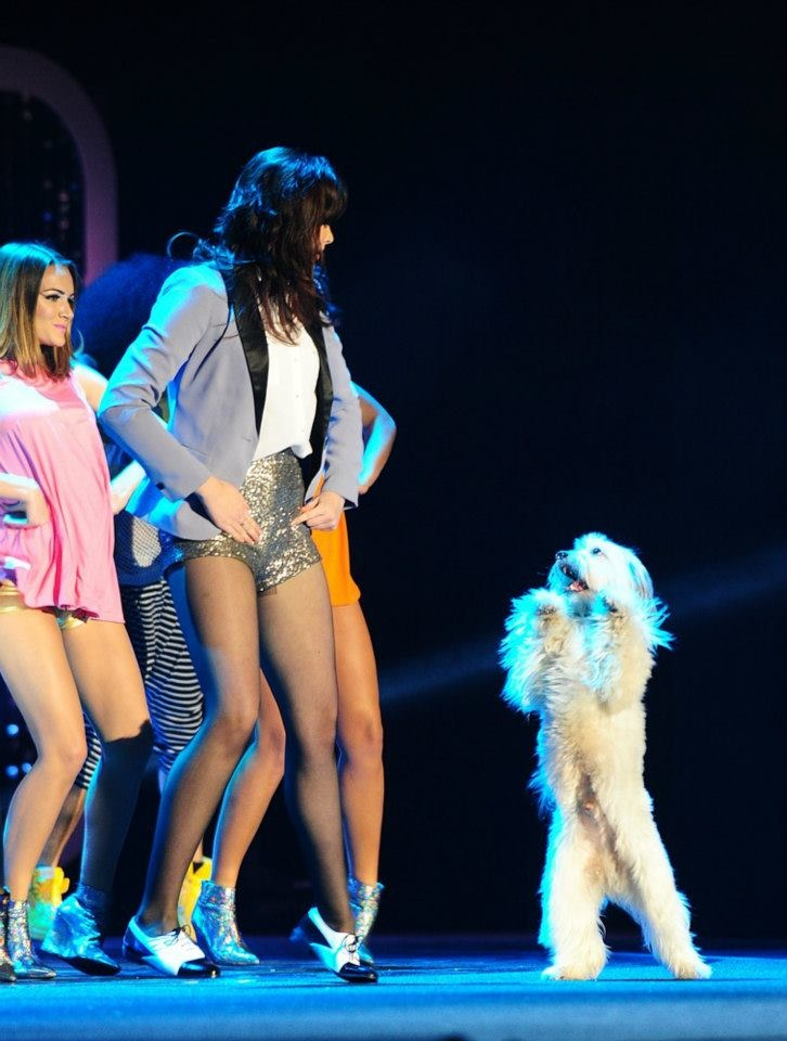 #Ashleigh and Pudsey giving it Gangnam style for the NTAs http://www.qwanz.com/headline/arts-entertainment/ashleigh-and-pudsey-giving-it-gangnam-style-for-the-ntas/results/?lang=uk