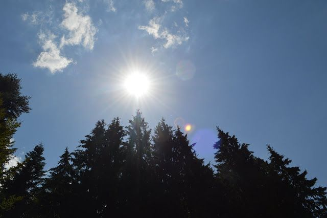 #tree # #sun #mountains #forest