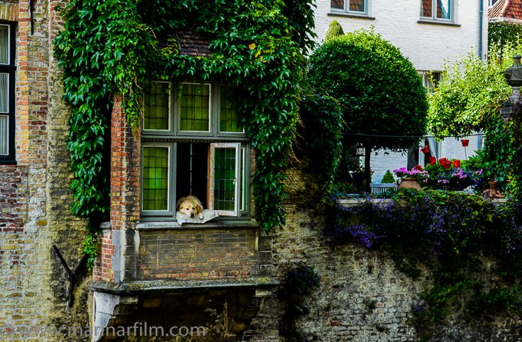 """""""I discovered windows one afternoon and after that, nothing was ever the same."""" – Anne Spollen, """"The Shape of Water"""" #relax, #lovedogs, #windows, #summertime, #lazyafternoon"""