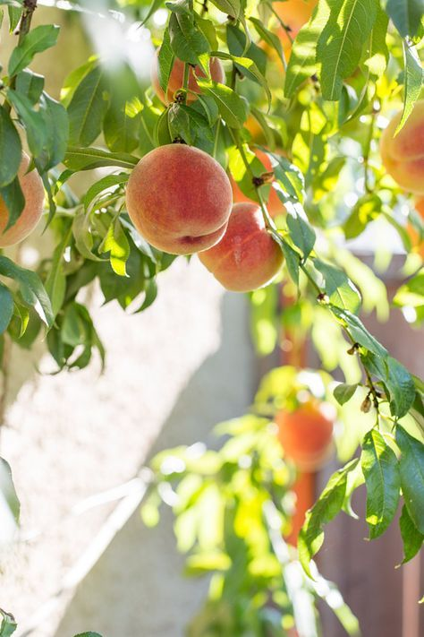 peach orchard hindu singles Peach orchard is a rural community with a population of 131 the median household income is $28,249 in peach orchard, 50% of residents are married, and families with children reside in 27% of the households.