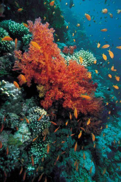 100 best things to see in Australia - The Great Barrier Reef #yankinaustralia #australia
