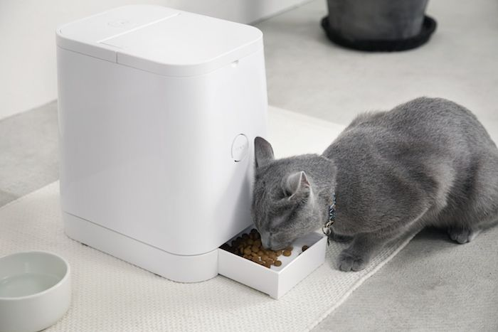 petly automatic pet feeder by rinn design