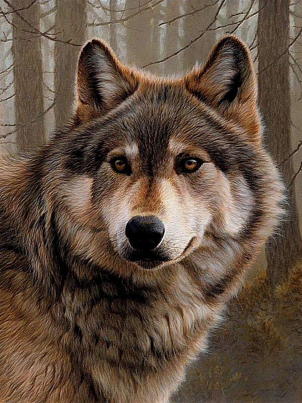 Днем, открытки волков красивые