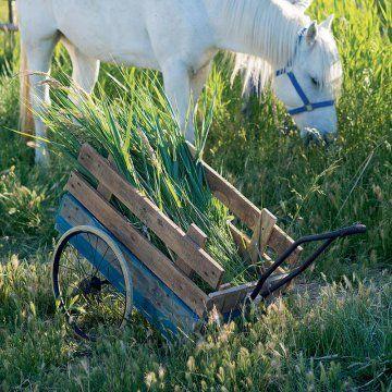 Construire une carriole en planches de bois