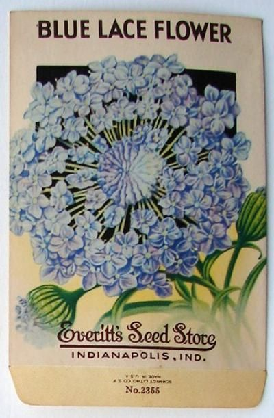 EVERITT'S SEED STORE,  Blue Lace Flower 2355, Vintage Seed Pac