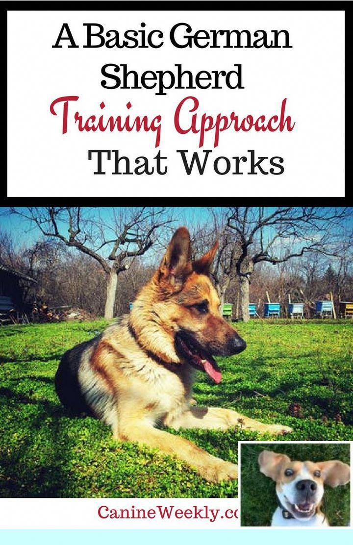 1 How To Teach Your Dog Mushing Commands And Diy Soft Dog