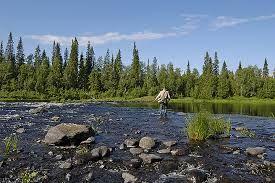kalastus kemijoki