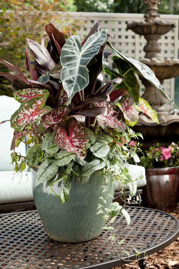 17 best images about container gardens on pinterest for Pikes nursery