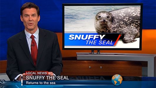 Shark Week's 'Snuffy the Seal' commercial is one of the best HILARIOUS  Top 5 best promos ever