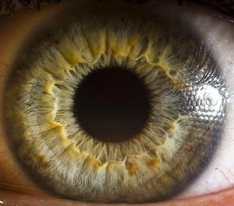 "By Suren Manvelyan, from the series of close-ups called ""Your Beautiful Eyes.  macro, human eye, yellow, patterns, nature, photography, circle, sphere, orb, pupil, iris,"