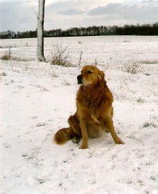 Winterverzorging - www.dogsfordogs.nl