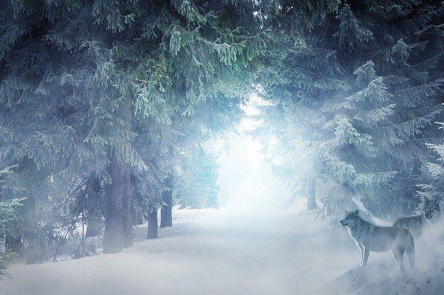 Free Image On Pixabay Landscape Winter Snow Wolves Landscape Winter Landscape Funny Jokes