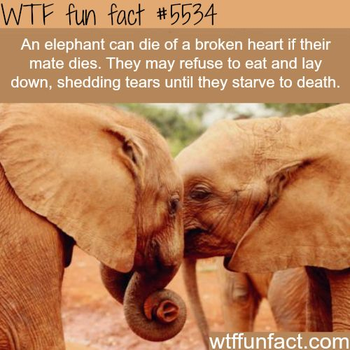 Funny Asian Facts 73