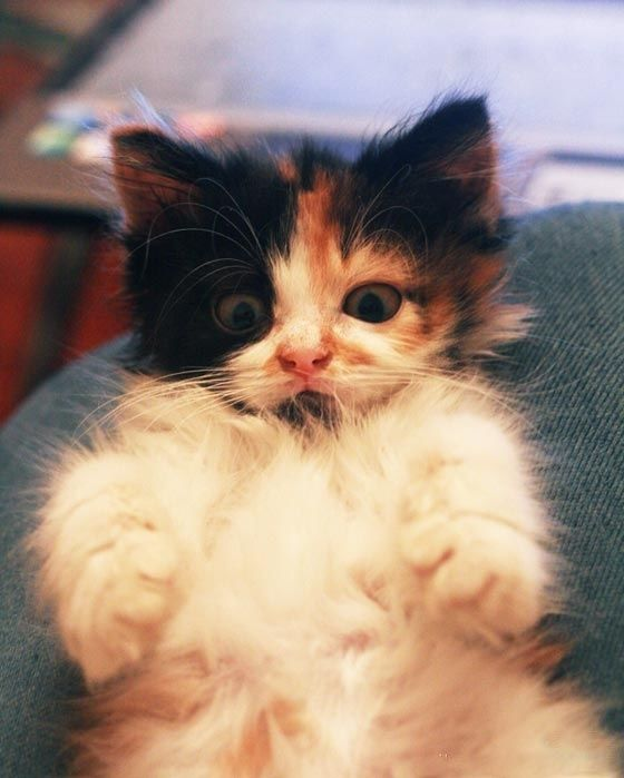 48 Kittens Giving You Kitty-Cat Eyes