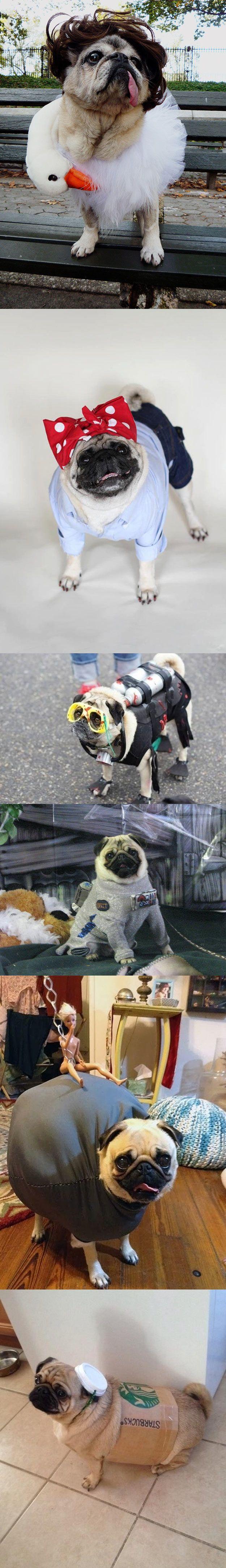 Pugs disfrazados.