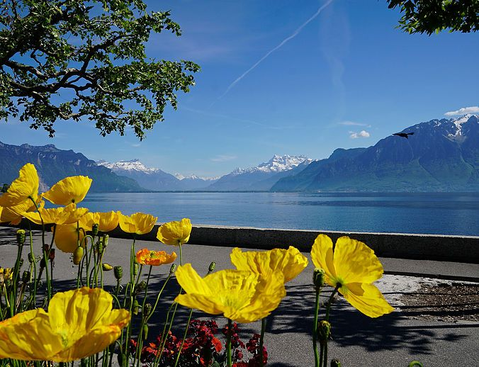 Montreux Riviera, Vevey, Lake Geneva, Lac Léman, Swiss Bliss Travel, Switzerland, Suisse