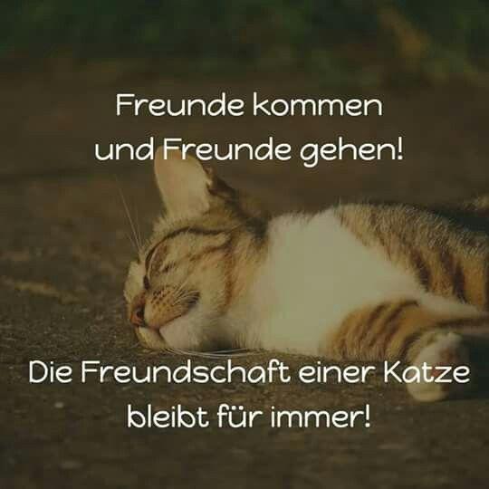 Freunde kommen und Freunde gehen! Die Freundschaft einer Katze bleibt für immer!
