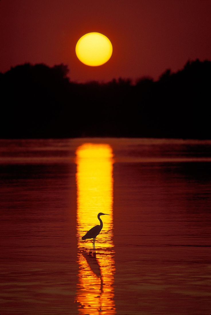 Gorgeous sunset with perfectly placed bird