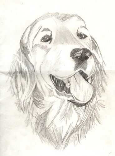 how to draw old yeller