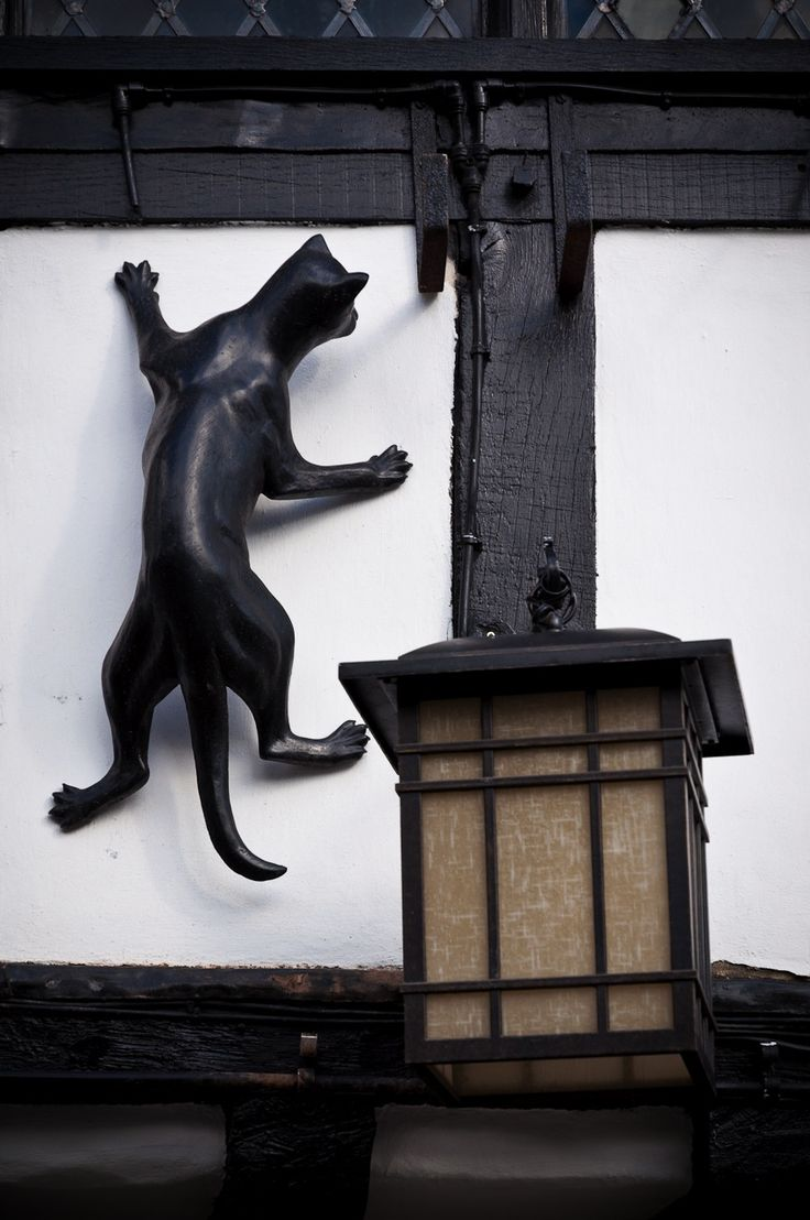 Statues of cats in different areas of York.    Black Swan Pub, York, England.