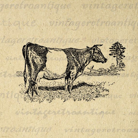 Printable Image Dutch Belted Cow Graphic Animal Download Illustration Digital Antique Clip Art. Vintage high resolution digital image download for printing, iron on transfers, tea towels, and other great uses. Real antique art. This graphic is high quality, high resolution at 8½ x 11 inches. Transparent background version included with every digital image.