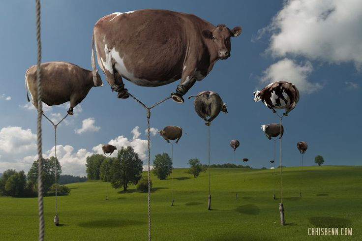 The Surreal Photoshop Zooscapes of Chris Benn - Design Mash