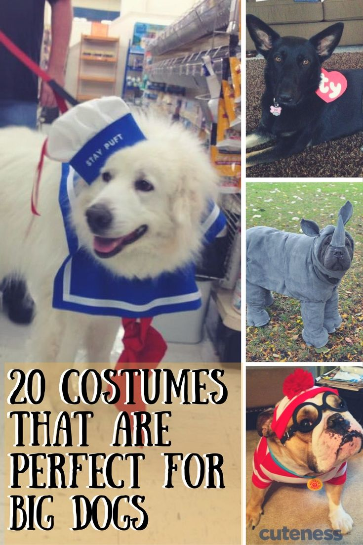 Big dogs love Halloween costumes too!