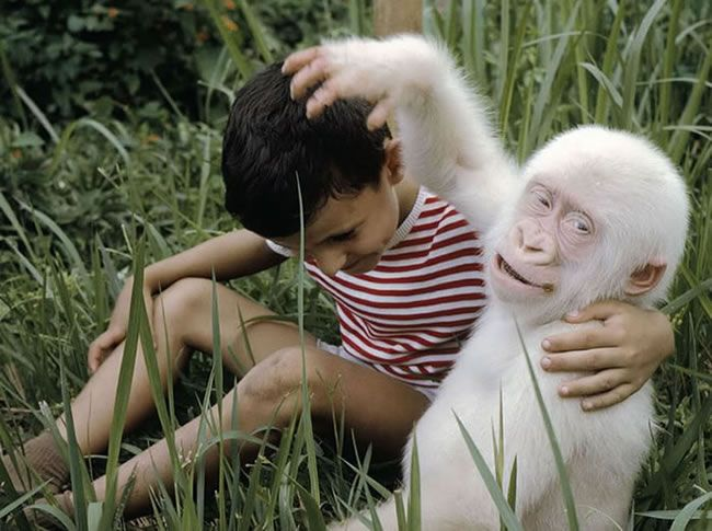 10-rare-albino-animals-that-you-have-never-seen-before-7