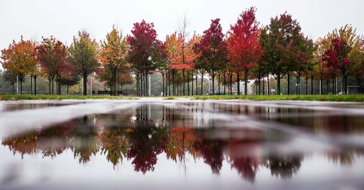 Autumnal colored trees are reflected in a puddle in front of the Federal German Chancellery, in Berlin, Oct. 17, 2016.