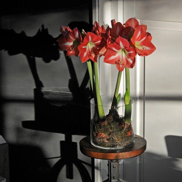 die besten 17 ideen zu bl hende zimmerpflanzen auf pinterest unter freiem himmel kleine. Black Bedroom Furniture Sets. Home Design Ideas