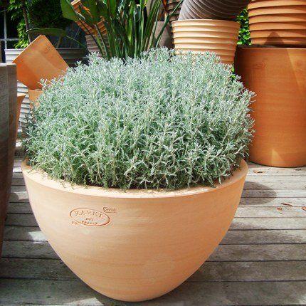1000 images about 21 jardin et plantes on pinterest. Black Bedroom Furniture Sets. Home Design Ideas