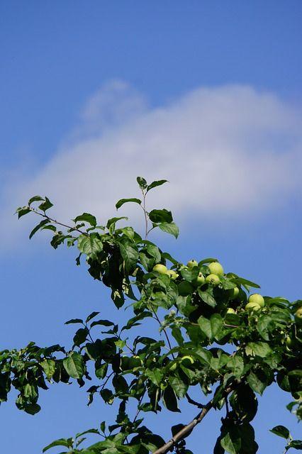 Vihreää ja sinistä omenoiden aikaan.