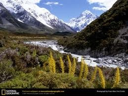 south island scenery - Google Search