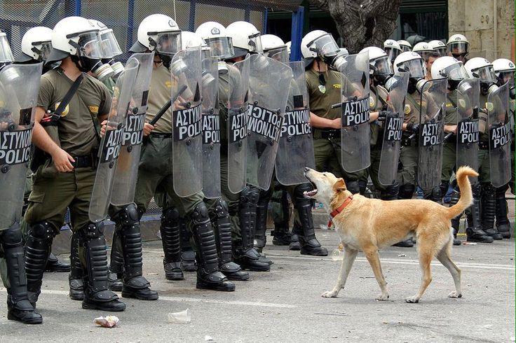 Küçümsediğimiz komşu Yunanistan'da köpek bile biliyor kimlere havlayacağını #Loukanikos :) #syriza