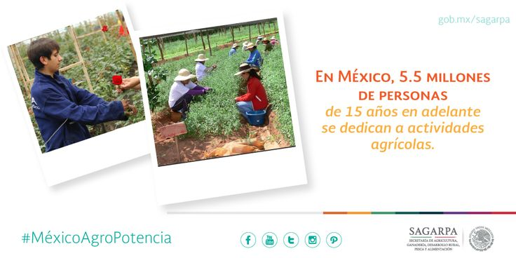 En México, 5.5 millones de personas de 15 años en adelante se dedican a actividades agrícolas.  SAGARPA SAGARPAMX #MéxicoAgroPotencia