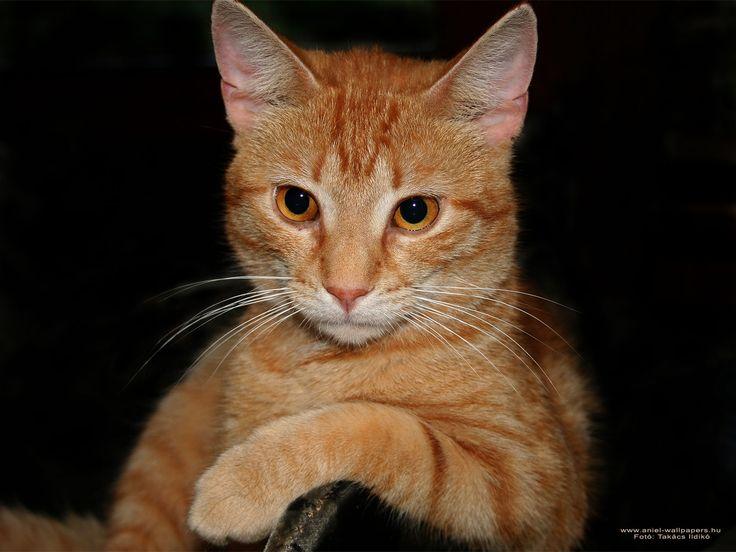 Vili cica / Cat Fotó: Benke Ildikó