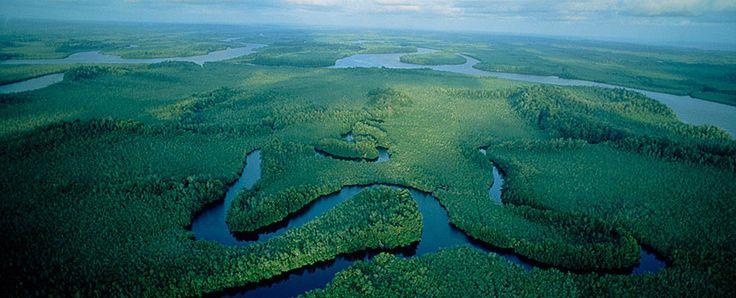 foret-equatoriale-congo,Le bassin du Congo