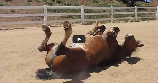 Já viu um cavalo peidar